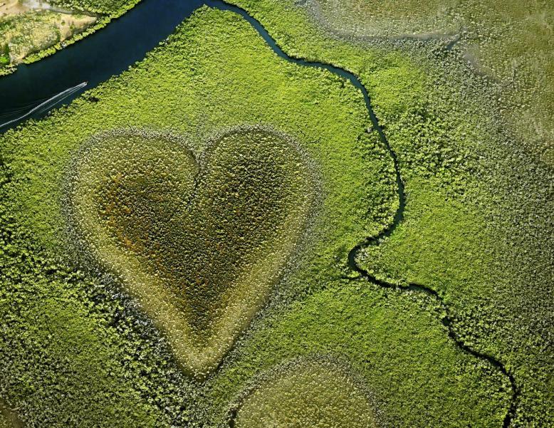 Heart in Voh 2