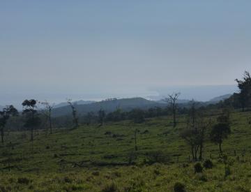 Área deforestado cerca de la comunidad Miguel Hidalgo, municipio San Andrés Tuxtla (Foto: Christoph Neger).