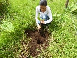 Lilí Rosas plantando uno de los primeros arbolitos (Foto: Christoph Neger).
