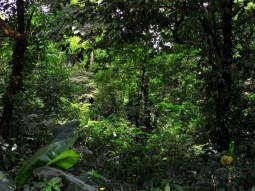 Estación de Biología Tropical UNAM (Sergio Pazos)