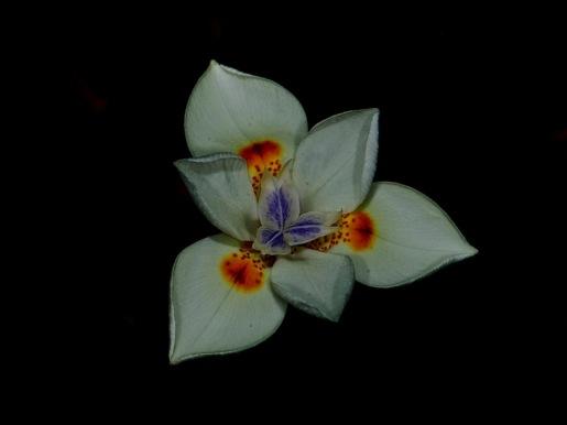 Flor (Sergio Pazos)