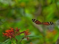 Mariposa (Sergio Pazos)