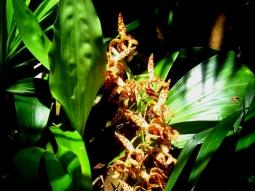 Orquídea 1 (Christoph Neger)