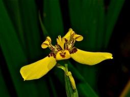 Orquídea 2 (Sergio Pazos)