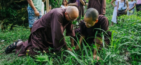 Meditacion yambigapan_itz-184-X2